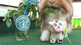Bunny enjoys everything Starbucks has to offer