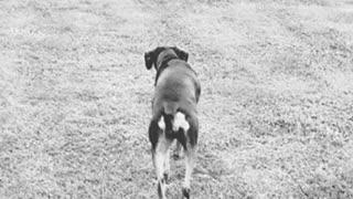 Dog Stakkibg