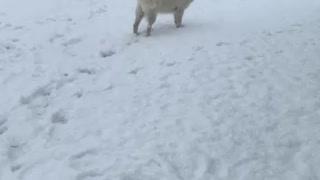 First snow part 2