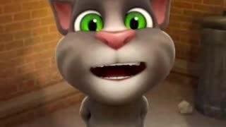 Funny cat s