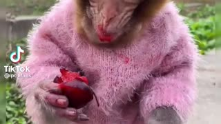 Monkey food time! New