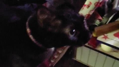Rey (Poo-poo) the black cat.