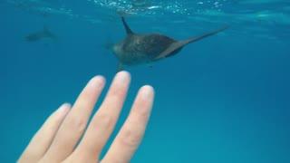 Florida dolphins