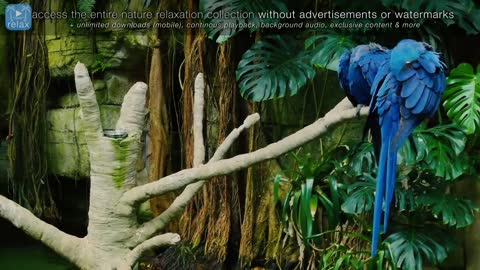 Breathtaking Colorful Birds of the Rainforest - Wildlife Nature