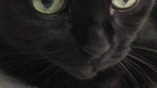 Cat cat cat mini cat mini