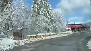 Incredible murre after snow fall