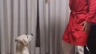 Funny challenge with dog