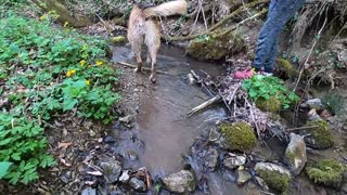 Forest Adventure For A Dog And Its Owner