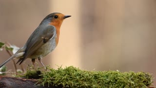 bird feeding on grass 2021