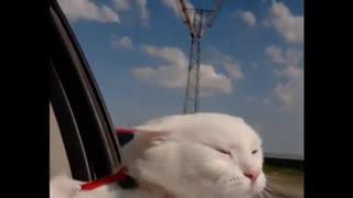 cat rides <> funny video