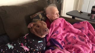 Sweet doggy watches cartoons with grandma