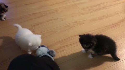 funny kitten slippery paws!