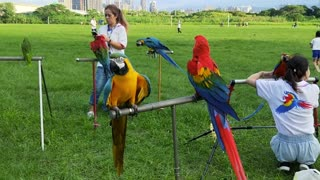 See outdoor parrot training