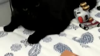 Cat fighting with toddler