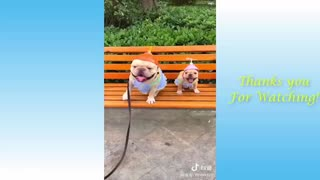 have fun with this cute little animals