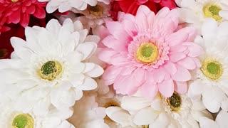 Flowers shop beautiful flowers