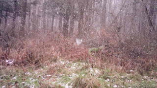 First Snowfall Getting the deer moving
