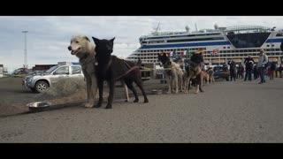 Beautiful Dogs Videos