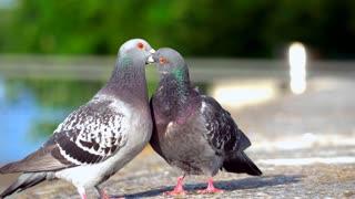 Love between birds 22