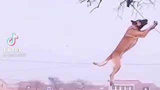 A Dog Professionally Climbing A Tall Tree