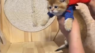 Superhero Kitten