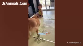 😍 A Cute Puppy 🐶and Baby👶 Love