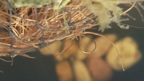 Underwater Video of my Tadpoles & Froglets in their Habitat