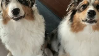 Play this noise and video your dog's reactions