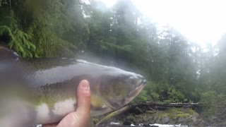 Guy Catches Salmon With His Bare Hands In Alaskan Stream