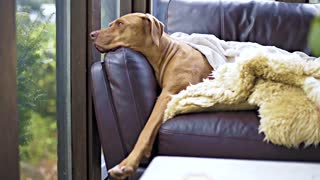 sad dog mortel boss