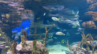 Incredible Underwater World - Relaxation Video