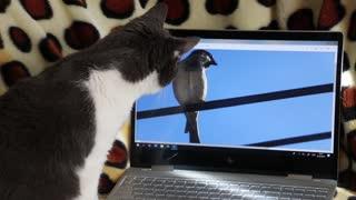 Curious cat!!