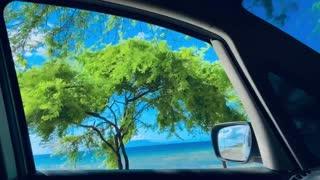 Scenery outside the car window