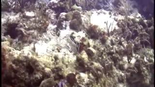 Cozumel Mx moray eel