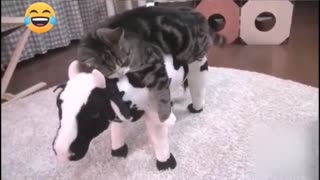 funny cute cats try not to laugh