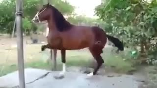 marching horse