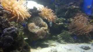Small fish hiding in coral petals.