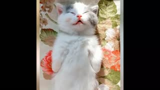 Funny cute cats compilation