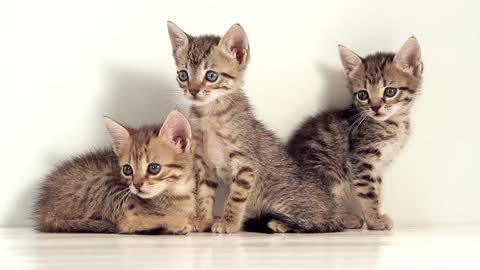 Cute peaceful cats