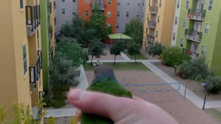 Other Pets Play Fetch, This Parrot Plays Throw