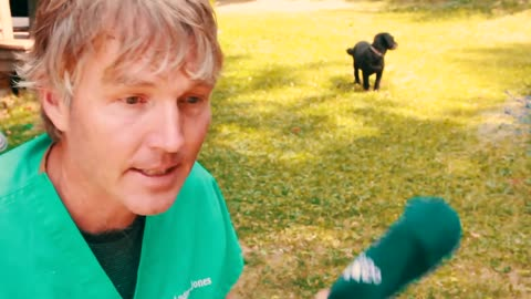 Learn How To Stop Your Dog From Chasing Cats