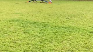 Dog tries agility course for the first time