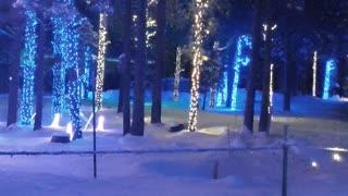 Trans Siberian Lights