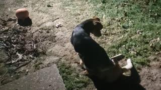 Dog v cat