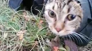 Cat hiding under the jacket