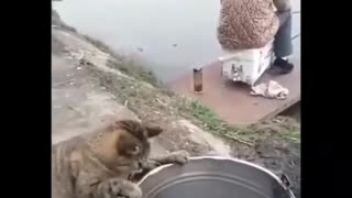 Funny Video of Cat Trying to Steal Fish