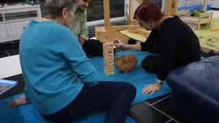 funny Bunny playing Jenga