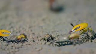 Crab Dancing