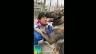 Amazing smart Dog Help People
