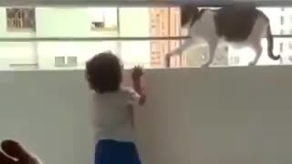 AMAZING CAT PROTECTS CHILD FROM BUILDING BALCONIES